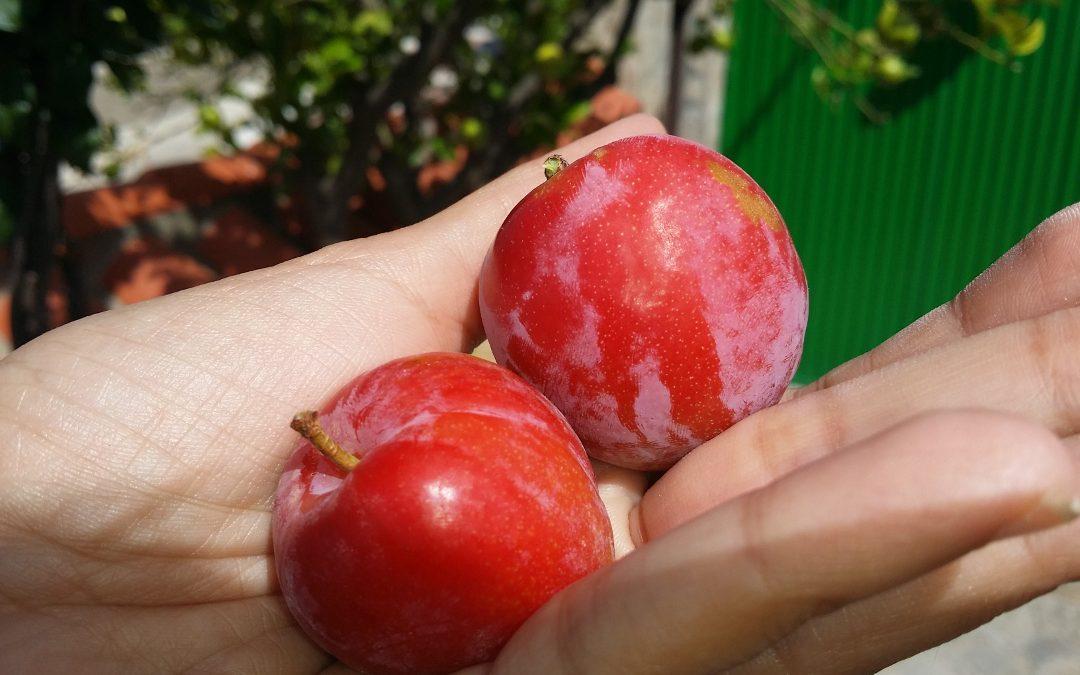 Tus frutos